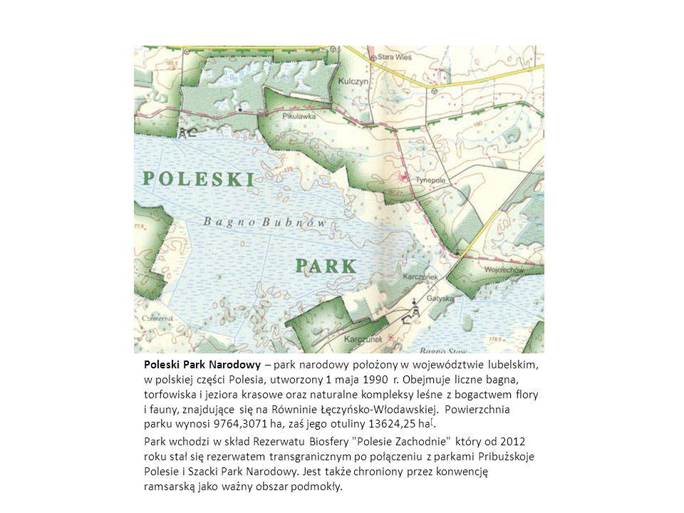 Poleski Park Narodowy – park narodowy położony w województwie lubelskim, w polskiej części Polesia, utworzony 1 maja 1990 r. Obejmuje liczne bagna, torfowiska i jeziora krasowe oraz naturalne kompleksy leśne z bogactwem flory i fauny, znajdujące się na Równinie Łęczyńsko-Włodawskiej. Powierzchnia parku wynosi 9764,3071 ha, zaś jego otuliny 13624,25 ha[.